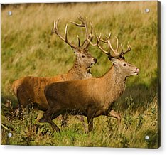 Acrylic Print featuring the photograph The Chase by Paul Scoullar