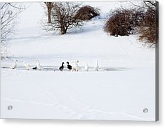 The Chattering Gaggle Acrylic Print