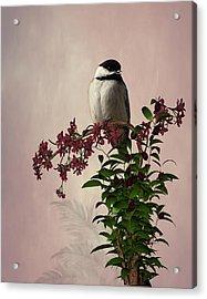 The Chickadee Acrylic Print