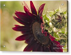 The Child Of Nature Acrylic Print by Sharon Mau