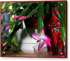 The Christmas Cactus Acrylic Print by Jim  Darnall