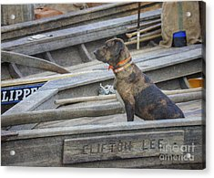 Acrylic Print featuring the photograph The Clifton Lee 2 by Pete Hellmann