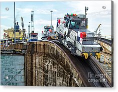 The Climbing Mule Of The Panama Canal Acrylic Print