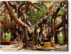 The Climbing Tree Acrylic Print