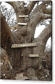 The Climbing Tree - Hurricane Katrina Survivor Acrylic Print