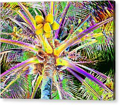 The Coconut Tree Acrylic Print