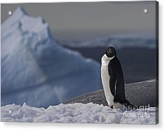The Coldest Place On Earth... Acrylic Print