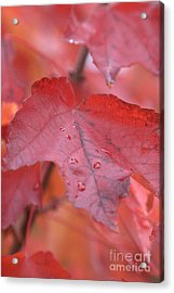 The Color Of Autumn Acrylic Print by Rich Collins
