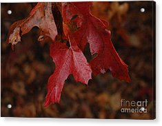The Color Of Fall Acrylic Print by Art Hill Studios