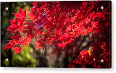 The Color Of Fall Acrylic Print by Patrice Zinck