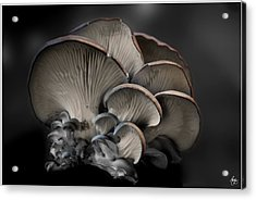 Acrylic Print featuring the photograph Painted Fungus by Wayne King
