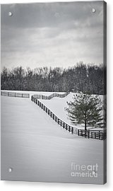 The Color Of Winter - Bw Acrylic Print by Mary Carol Story