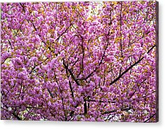 The Color Purple 2 Acrylic Print by Paul W Faust -  Impressions of Light