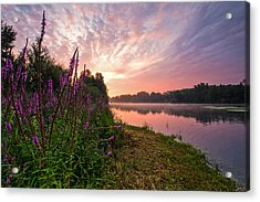 The Color Purple Acrylic Print by Davorin Mance