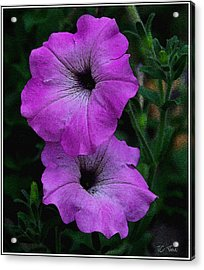 Acrylic Print featuring the photograph The Color Purple   by James C Thomas