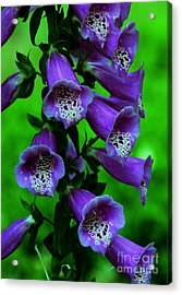 The Color Purple Acrylic Print by Kathleen Struckle