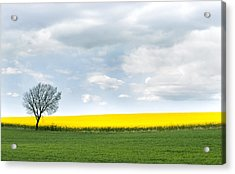 The Colors Of Spring Acrylic Print by Mike Santis