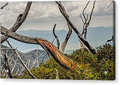 The Colour Within Acrylic Print by Mark Lucey