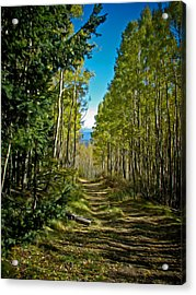 Acrylic Print featuring the painting The Cool Path Through Arizona Aspens by John Haldane