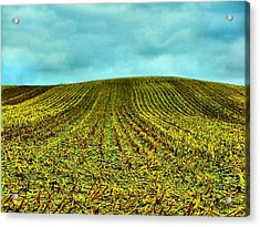 The Corn Rows Acrylic Print by Julie Dant