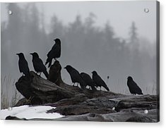 Acrylic Print featuring the photograph The Corvidae Family  by Cathie Douglas