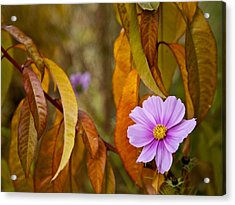 The Cosmos In The Peach Tree Acrylic Print by Theresa Tahara