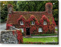 The Cottage Acrylic Print by Adrian Evans