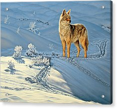 the Coyote - God's Dog Acrylic Print