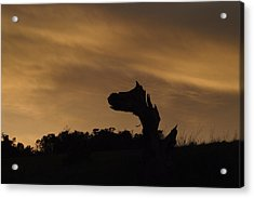 Acrylic Print featuring the photograph The Creature by Priya Ghose
