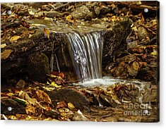 Acrylic Print featuring the photograph The Creek by Debra Crank