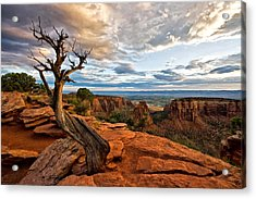 The Crooked Old Tree Acrylic Print