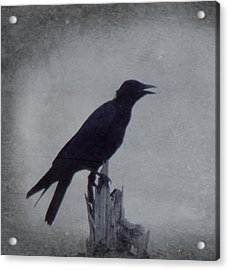 The Crow Acrylic Print by Justin Ivins