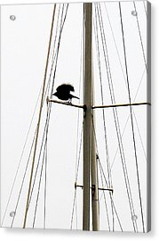 Acrylic Print featuring the photograph The Crow Leaving The Absent Crows Nest by John King