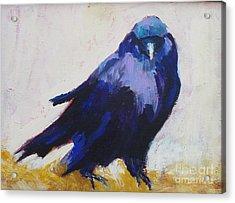 The Crow Acrylic Print by Virginia Dauth