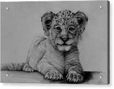 The Cub Acrylic Print by Jean Cormier