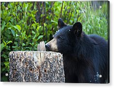 The Cub That Came For Lunch 1 Acrylic Print