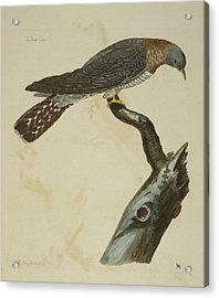 The Cuckoo Acrylic Print