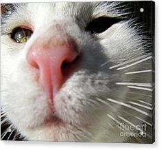 The Curious Mickey Acrylic Print by CML Brown