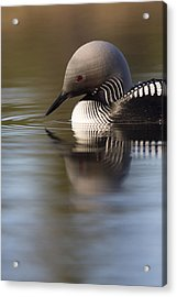 The Curve Of A Neck Acrylic Print