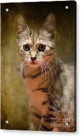 The Cutest Kitty Acrylic Print by Klara Acel