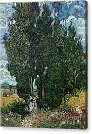 The Cypresses Acrylic Print by Vincent van Gogh