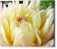 Acrylic Print featuring the photograph Yellow Dahlia by Margie Amberge