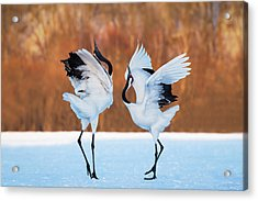 The Dance Of Love Acrylic Print by C. Mei