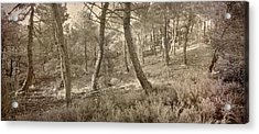 The Dance Of The Forest Acrylic Print by Guido Montanes Castillo