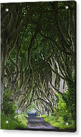 The Dark Hedges Acrylic Print
