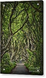 The Dark Hedges Acrylic Print