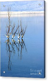 The Dead Sea Acrylic Print by Arie Arik Chen