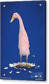 The Deciduous Duck... Acrylic Print by Will Bullas