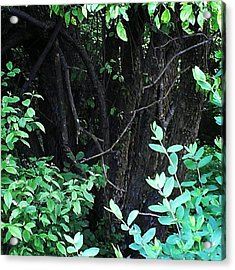 Acrylic Print featuring the photograph The Deep Dark Woods by Thomasina Durkay