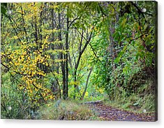 The Dense Forest Acrylic Print by Guido Montanes Castillo